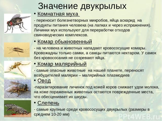 Значение двукрылых Комнатная муха - переносит болезнетворных микробов, яйца аскарид на продукты питания человека (на лапках и через испражнения). Личинки мух используют для переработки отходов свиноводческих комплексов. Комар малярийный самые опасны…