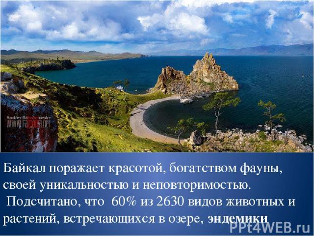 Байкал поражает красотой, богатством фауны, своей уникальностью и неповторимостью. Подсчитано, что 60% из 2630 видов животных и растений, встречающихся в озере, эндемики