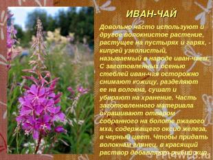ИВАН-ЧАЙ Довольно часто используют и другое волокнистое растение, растущее на пу