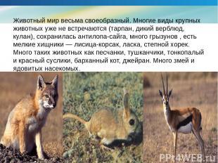 Животный мир весьма своеобразный. Многие виды крупных животных уже не встречаютс