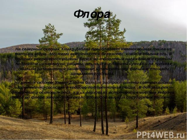 Флора На северных склонах Хамар-Дабана преобладаеттемнохвойная тайга из пихты и кедра. Местами встречаются березняки, кое-где обычна ель. В долинах рек распространены березово-тополевые насаждения с густым подлеском из черемухи, рябины, ольхи. В ли…