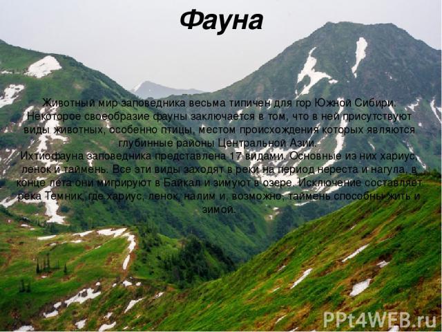 Фауна Животный мир заповедника весьма типичен для гор Южной Сибири. Некоторое своеобразие фауны заключается в том, что в ней присутствуют виды животных, особенно птицы, местом происхождения которых являются глубинные районы Центральной Азии. Ихтиоф…