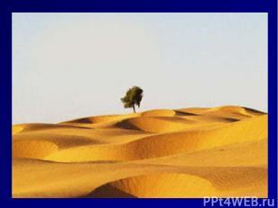 Индийская пустыня