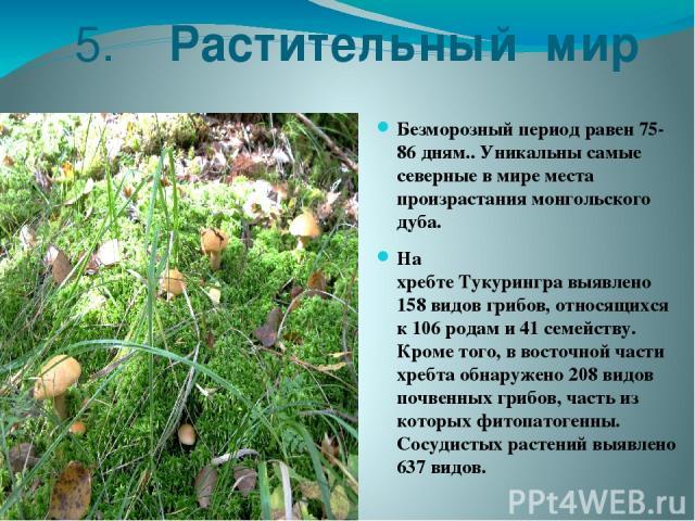 5. Растительный мир Безморозный периодравен 75-86 дням.. Уникальны самые северные в мире места произрастания монгольского дуба. На хребтеТукурингравыявлено 158 видов грибов, относящихся к 106 родам и 41 семейству. Кроме того, в восточной части хр…