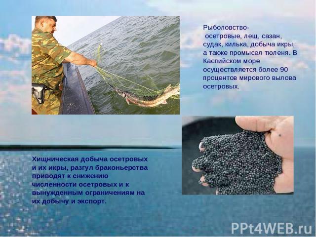 Хищническая добыча осетровых и их икры, разгул браконьерства приводят к снижению численности осетровых и к вынужденным ограничениям на их добычу и экспорт. Рыболовство- осетровые, лещ, сазан, судак, килька, добыча икры, а также промысел тюленя. В Ка…