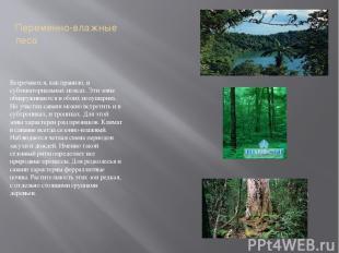 Переменно-влажные леса Встречаются, как правило, в субэкваториальных поясах. Эти