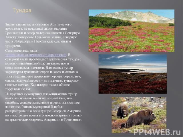 Тундра Значительная часть островов Арктического архипелага, не покрытых льдом окраины Гренландии и север материка, включая Северную Аляску, побережье Гудзонова залива, северную часть Лабрадора и Ньюфаундленда, заняты тундрами. Североамериканскаятун…