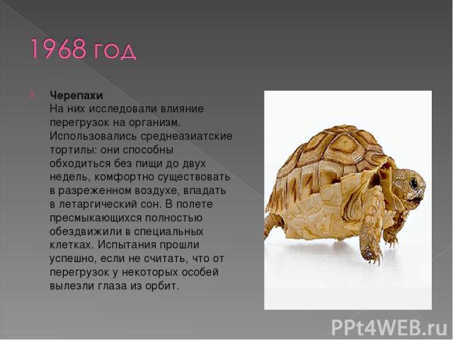 Черепахи На них исследовали влияние перегрузок на организм. Использовались среднеазиатские тортилы: они способны обходиться без пищи до двух недель, комфортно существовать в разреженном воздухе, впадать в летаргический сон. В полете пресмыкающихся п…