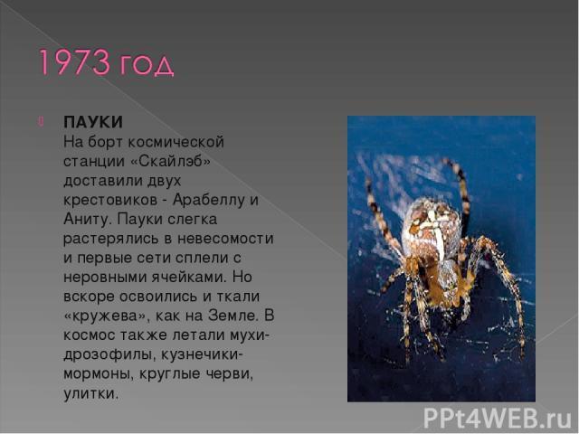 ПАУКИ На борт космической станции «Скайлэб» доставили двух крестовиков - Арабеллу и Аниту. Пауки слегка растерялись в невесомости и первые сети сплели с неровными ячейками. Но вскоре освоились и ткали «кружева», как на Земле. В космос также летали м…