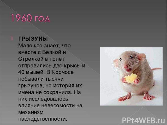 ГРЫЗУНЫ Мало кто знает, что вместе с Белкой и Стрелкой в полет отправились две крысы и 40 мышей. В Космосе побывали тысячи грызунов, но история их имена не сохранила. На них исследовалось влияние невесомости на механизм наследственности.