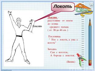 Локоть – расстояние от локтя до конца среднего пальца. ( от 38 до 46 см. ) Посло