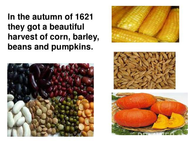 In the autumn of 1621 they got a beautiful harvest of corn, barley, beans and pumpkins.