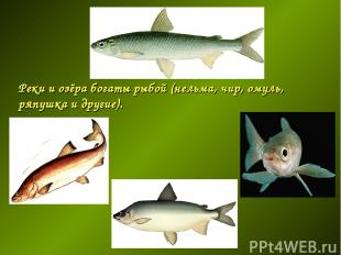 Реки и озёра богаты рыбой (нельма, чир, омуль, ряпушка и другие).