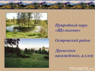 Природный парк «Щелыково» Островский район Древесные насаждения, аллеи