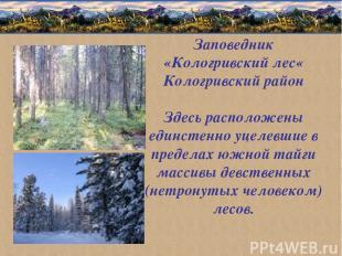 Заповедник «Кологривский лес« Кологривский район Здесь расположены единстенно уц