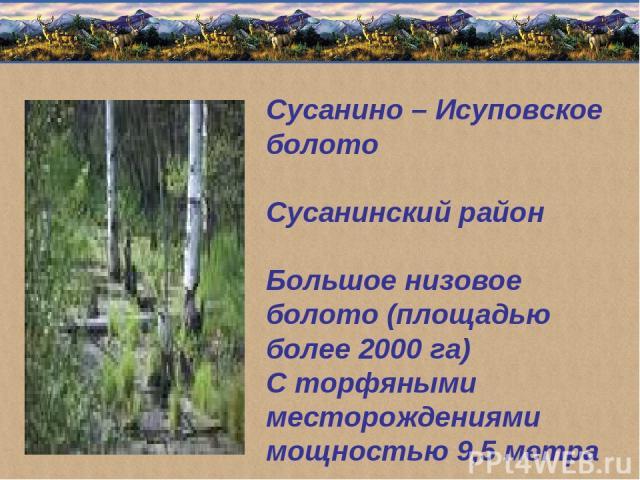 Сусанино – Исуповское болото Сусанинский район Большое низовое болото (площадью более 2000 га) С торфяными месторождениями мощностью 9,5 метра