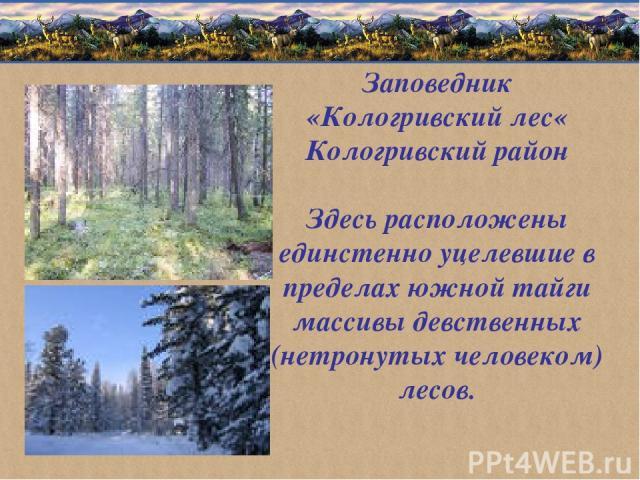 Заповедник «Кологривский лес« Кологривский район Здесь расположены единстенно уцелевшие в пределах южной тайги массивы девственных (нетронутых человеком) лесов.