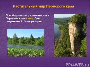Растительный мир Пермского края Преобладающая растительность в Пермском крае – л