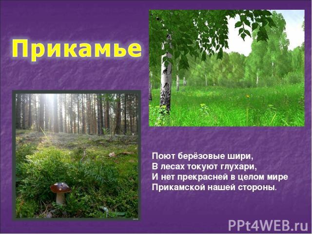 Поют берёзовые шири, В лесах токуют глухари, И нет прекрасней в целом мире Прикамской нашей стороны.