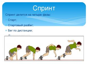 Спринт делится на четыре фазы: Старт; Стартовый разбег; Бег по дистанции; Финиши