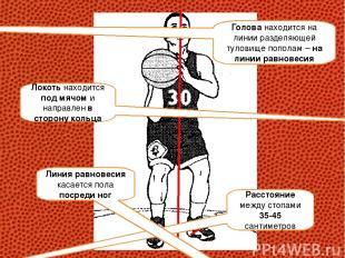 Расстояние между стопами 35-45 сантиметров Голова находится на линии разделяющей