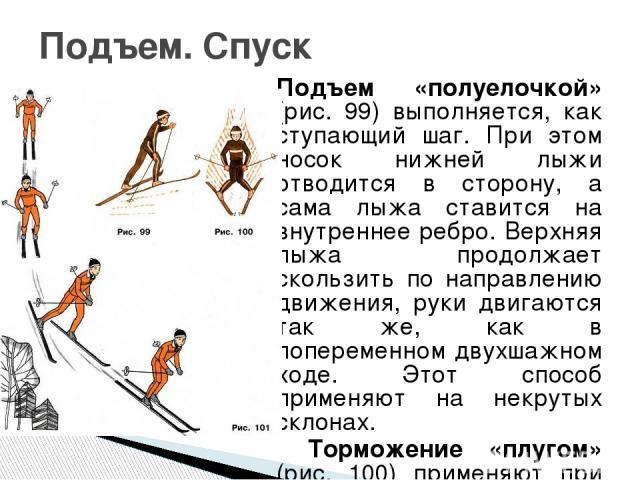 Подъем «полуелочкой» (рис. 99) выполняется, как ступающий шаг. При этом носок нижней лыжи отводится в сторону, а сама лыжа ставится на внутреннее ребро. Верхняя лыжа продолжает скользить по направлению движения, руки двигаются так же, как в попереме…
