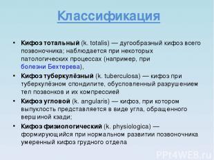 Классификация Кифоз тотальный (k. totalis)— дугообразный кифоз всего позвоночни