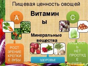 Пищевая ценность овощей С А Витамины Минеральные вещества РОСТ ЗРЕНИЕ КРЕПКИЕ ЗУ