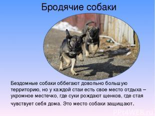 Бродячие собаки Бездомные собаки оббегают довольно большую территорию, но у кажд