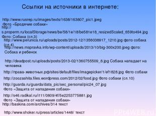 http://www.rusrep.ru/images/texts/1638/163807_pic1.jpeg Фото «Бродячие собаки» h