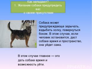 Собака может предупреждающе зарычать, вздыбить холку, повернуться боком. В этом