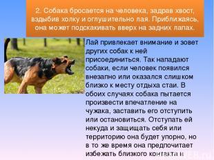 Лай привлекает внимание и зовет других собак к ней присоединиться. Так нападают