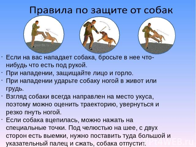 Если на вас нападает собака, бросьте в нее что-нибудь что есть под рукой. При нападении, защищайте лицо и горло. При нападении ударьте собаку ногой в живот или грудь. Взгляд собаки всегда направлен на место укуса, поэтому можно оценить траекторию, у…