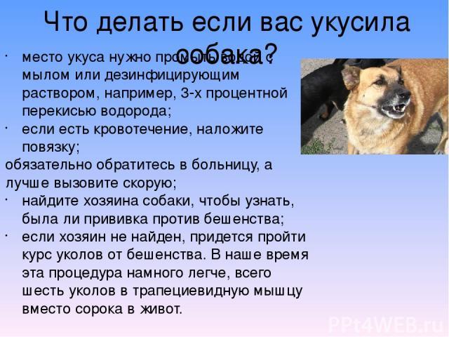 Что делать если вас укусила собака? место укуса нужно промыть водой с мылом или дезинфицирующим раствором, например, 3-х процентной перекисью водорода; если есть кровотечение, наложите повязку; обязательно обратитесь в больницу, а лучше вызовите ско…