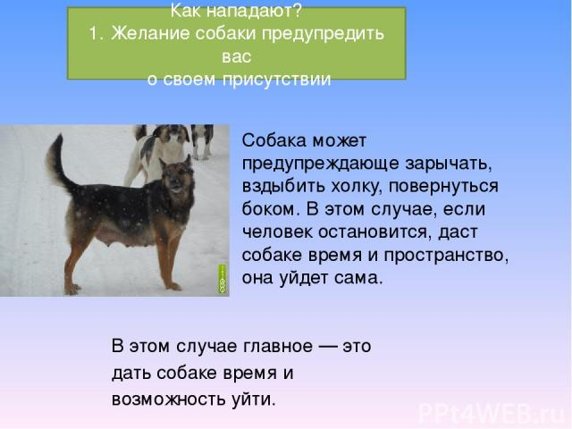 Собака может предупреждающе зарычать, вздыбить холку, повернуться боком. В этом случае, если человек остановится, даст собаке время и пространство, она уйдет сама. В этом случае главное — это дать собаке время и возможность уйти. Как нападают? 1. Же…