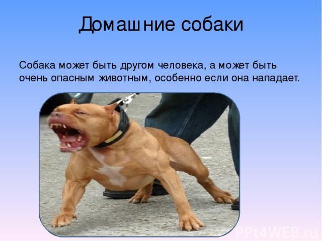 Домашние собаки Собака может быть другом человека, а может быть очень опасным животным, особенно если она нападает.