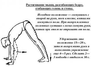Растягивание мышц, разгибающих бедро, сгибающих голень и стопы. Исходное положен