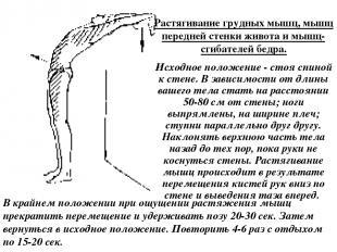 Растягивание грудных мышц, мышц передней стенки живота и мышц-сгибателей бедра.