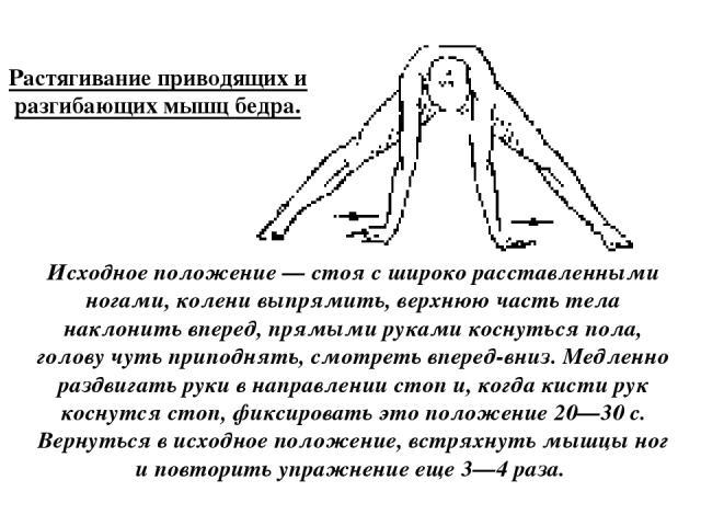 Растягивание приводящих и разгибающих мышц бедра. Исходное положение — стоя с широко расставленными ногами, колени выпрямить, верхнюю часть тела наклонить вперед, прямыми руками коснуться пола, голову чуть приподнять, смотреть вперед-вниз. Медленно …