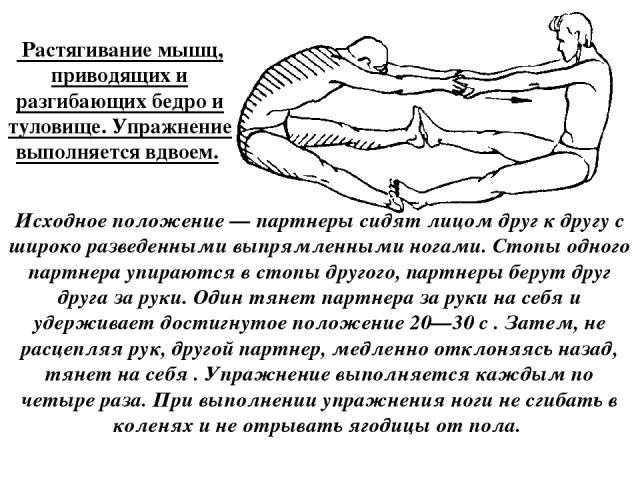 Растягивание мышц, приводящих и разгибающих бедро и туловище. Упражнение выполняется вдвоем. Исходное положение — партнеры сидят лицом друг к другу с широко разведенными выпрямленными ногами. Стопы одного партнера упираются в стопы другого, партнер…