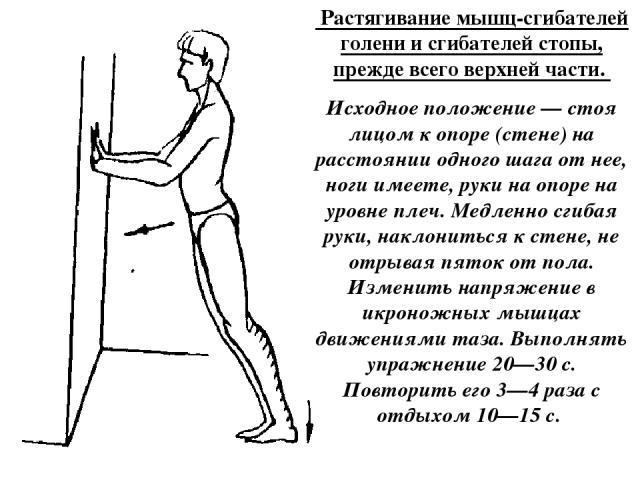 Растягивание мышц-сгибателей голени и сгибателей стопы, прежде всего верхней части. Исходное положение — стоя лицом к опоре (стене) на расстоянии одного шага от нее, ноги имеете, руки на опоре на уровне плеч. Медленно сгибая руки, наклониться к сте…
