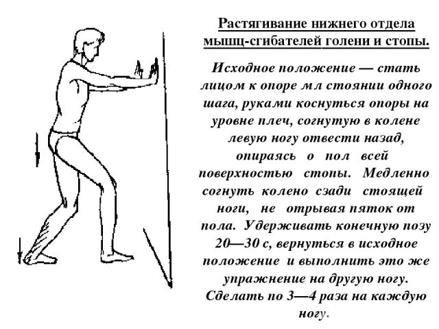 Растягивание нижнего отдела мышц-сгибателей голени и стопы. Исходное положение — стать лицом к опоре мл стоянии одного шага, руками коснуться опоры на уровне плеч, согнутую в колене левую ногу отвести назад, опираясь о пол всей поверхностью стопы. М…
