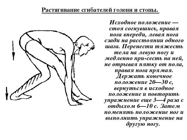 Растягивание сгибателей голени и стопы. Исходное положение — стоя согнувшись, правая нога впереди, левая нога сзади на расстоянии одного шага. Перенести тяжесть тела на левую ногу и медленно при сесть на ней, не отрывая пятку от пола, правая нога пр…