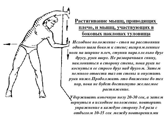 Растягивание мышц, приводящих плечо, и мышц, участвующих в боковых наклонах туловища Исходное положение - стоя на расстоянии одного шага боком к стене; выпрямленные ноги на ширине плеч, ступни параллельно друг другу, руки вверх. Не разворачивая спин…