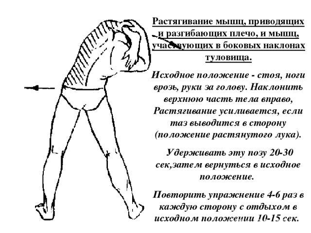 Растягивание мышц, приводящих и разгибающих плечо, и мышц, участвующих в боковых наклонах туловища. Исходное положение - стоя, ноги врозь, руки за голову. Наклонить верхнюю часть тела вправо, Растягивание усиливается, если таз выводится в сторону (п…