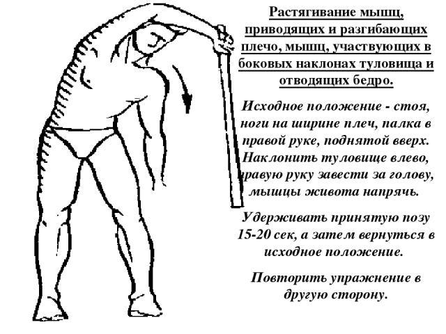 Растягивание мышц, приводящих и разгибающих плечо, мышц, участвующих в боковых наклонах туловища и отводящих бедро. Исходное положение - стоя, ноги на ширине плеч, палка в правой руке, поднятой вверх. Наклонить туловище влево, правую руку завести за…