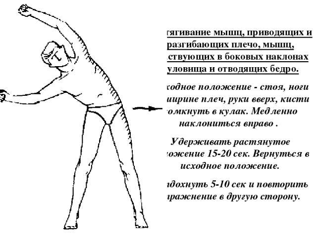 Растягивание мышц, приводящих и разгибающих плечо, мышц, участвующих в боковых наклонах туловища и отводящих бедро. Исходное положение - стоя, ноги на ширине плеч, руки вверх, кисти сомкнуть в кулак. Медленно наклониться вправо . Удерживать растянут…