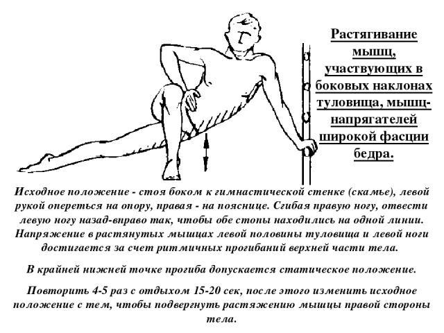Растягивание мышц, участвующих в боковых наклонах туловища, мышц-напрягателей широкой фасции бедра. Исходное положение - стоя боком к гимнастической стенке (скамье), левой рукой опереться на опору, правая - на пояснице. Сгибая правую ногу, отвести л…