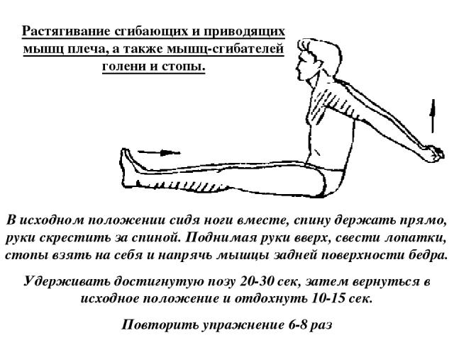 Растягивание сгибающих и приводящих мышц плеча, а также мышц-сгибателей голени и стопы. В исходном положении сидя ноги вместе, спину держать прямо, руки скрестить за спиной. Поднимая руки вверх, свести лопатки, стопы взять на себя и напрячь мышцы за…