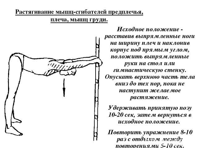 Растягивание мышц-сгибателей предплечья, плеча, мышц груди. Исходное положение - расставив выпрямленные ноги на ширину плеч и наклонив корпус под прямым углом, положить выпрямленные руки на стол или гимнастическую стенку. Опускать верхнюю часть тела…